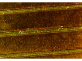 Laser kapton cutting - all you need to know